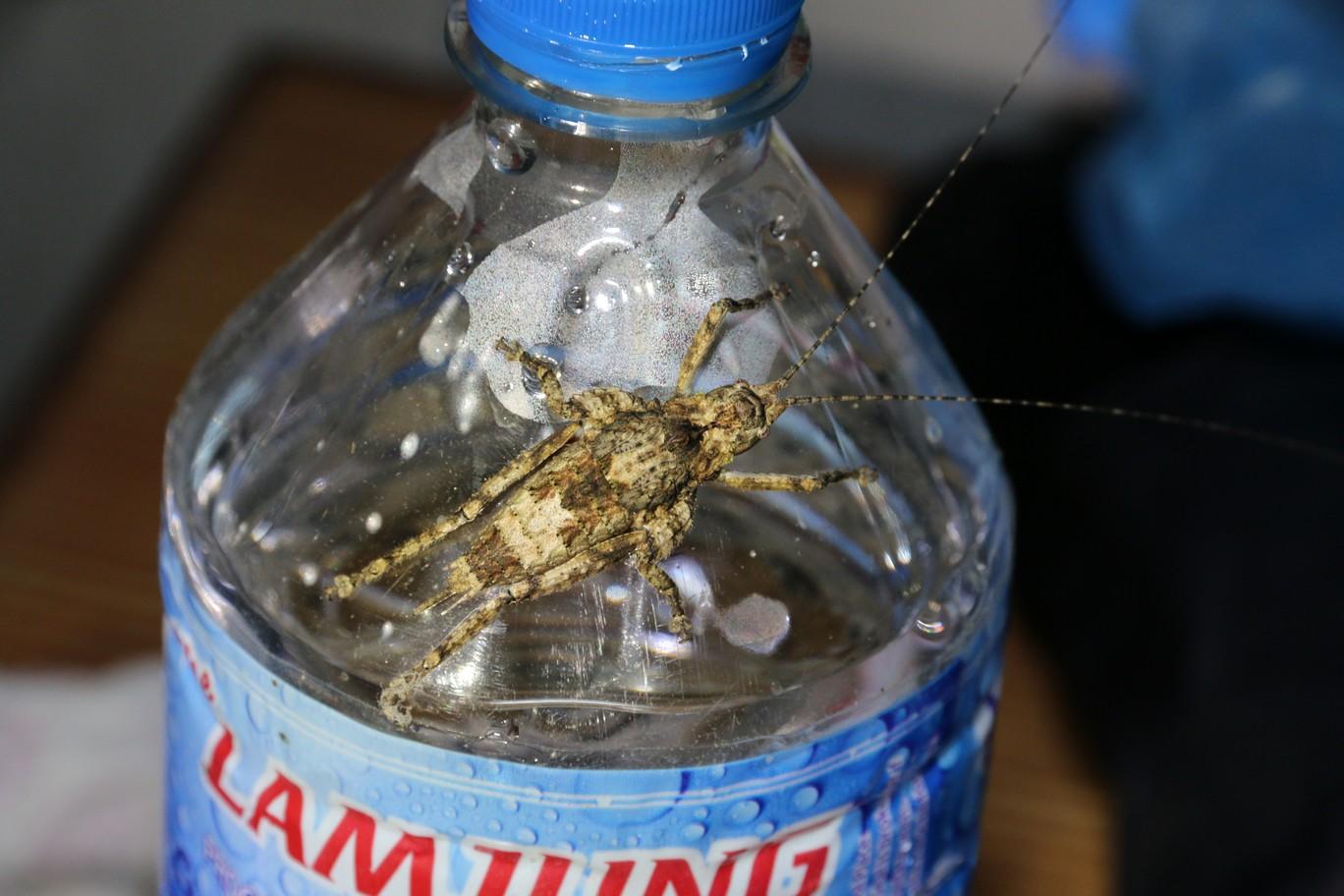 Unidentifiziertes Insekt