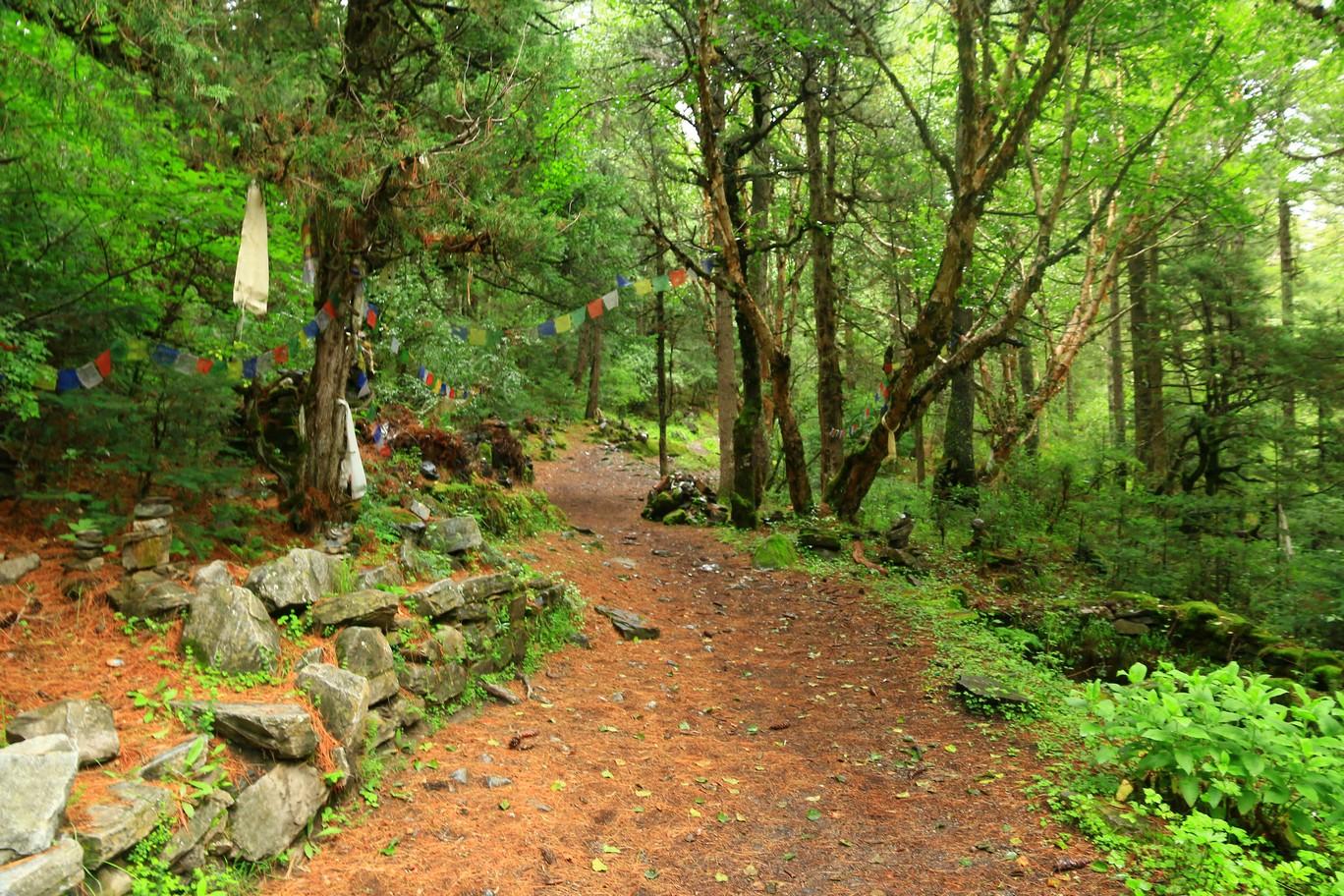 Wald bei Timang