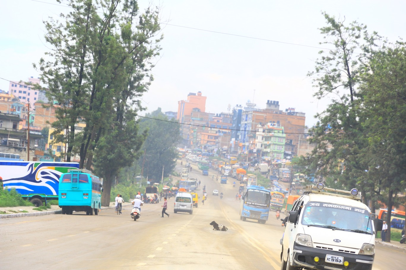 Kühe in mitten der Straße in Kathmandu - keine Seltenheit